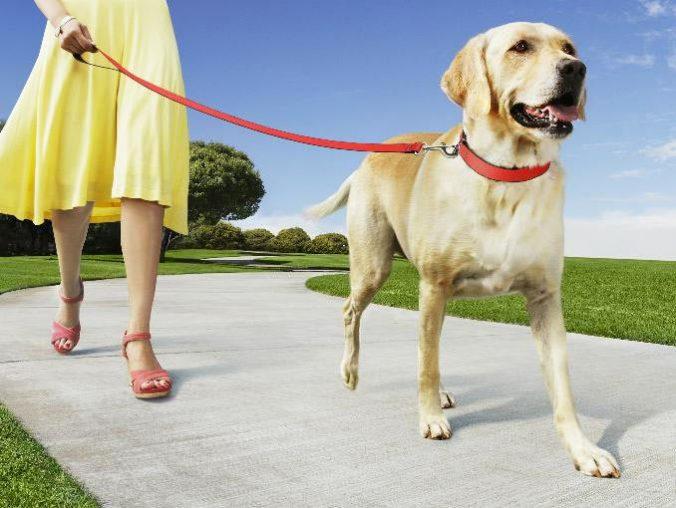 consejos-para-pasear-con-tu-perro