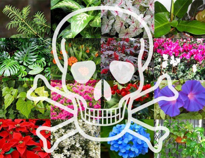 plantas venenosas perros