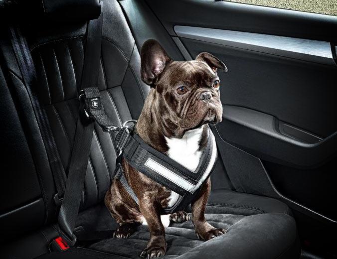 arnes coche perro