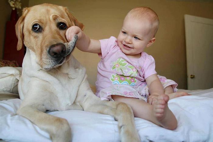 bebes-perros