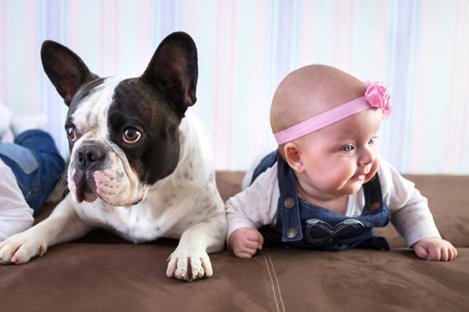 bulldog-frances-ninos