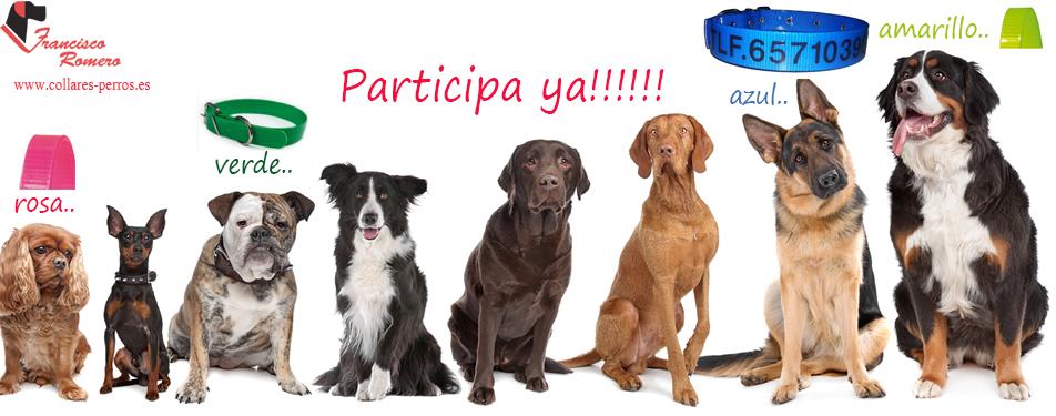 collares-perros-sorteo-facebook