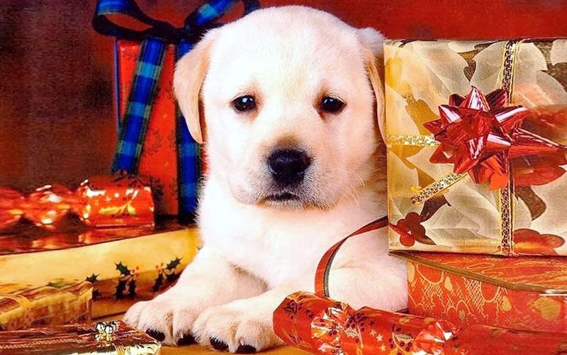 regalos-mascotas-reyes-magos