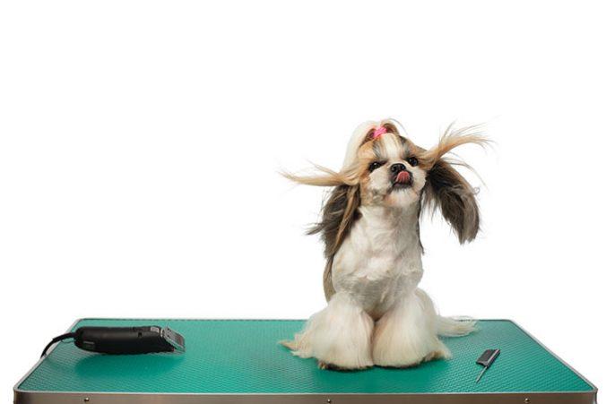 ¿ Debemos cortar a nuestro perro su pelo en verano ?