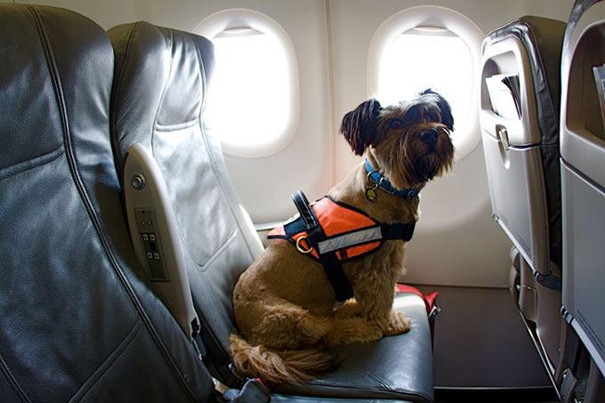 collares para perros viajar en avion perro