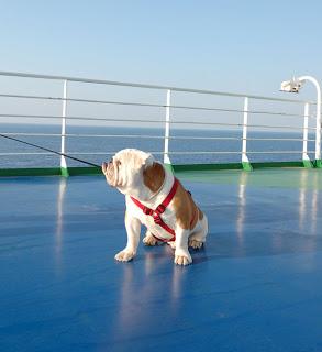 viajar con perro barco collares para perros