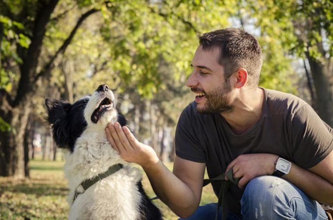 ¿Dónde vas a dejar a tu perro este verano?