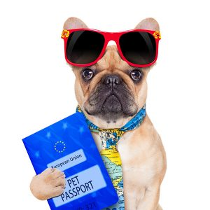 pasaporte para perros