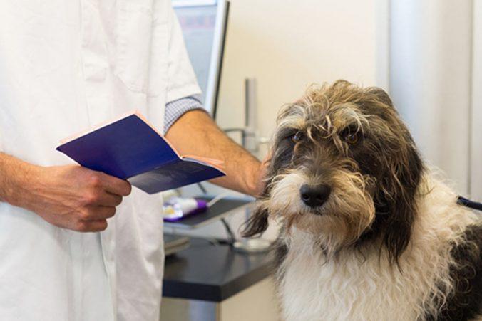 Pasaporte para perros ¿Cómo lo obtenemos?