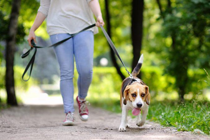 El primer paseo de mi perro ¿Qué debo de saber?