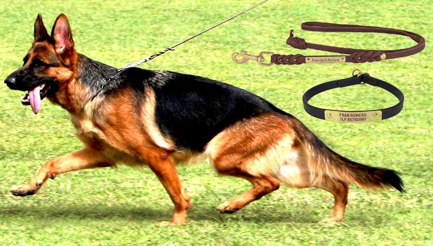 Collares para Perros de Piel