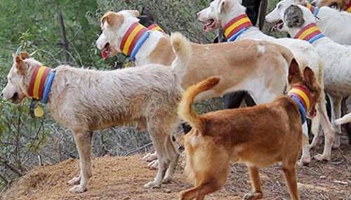 Collares para perros de Rehala